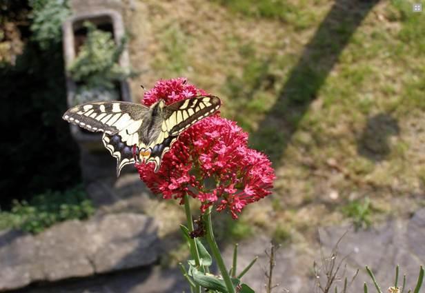 JEP 2019- balade botanique- Sénéchas