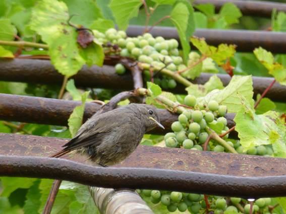 chalet-location-la-bayte-le-martinet-cevennes-oiseau