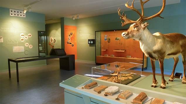 Musée Grand Site de l'Aven Orgnac