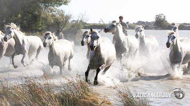 Camargue Sauvage Safari 4x4 - AIGUES MORTES