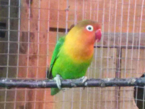 Jardin Animalier de Mialet - 04