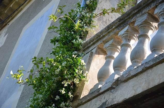 balcon_vegetation