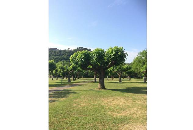 aire-naturelle-camping-clos-abbaye-cendras