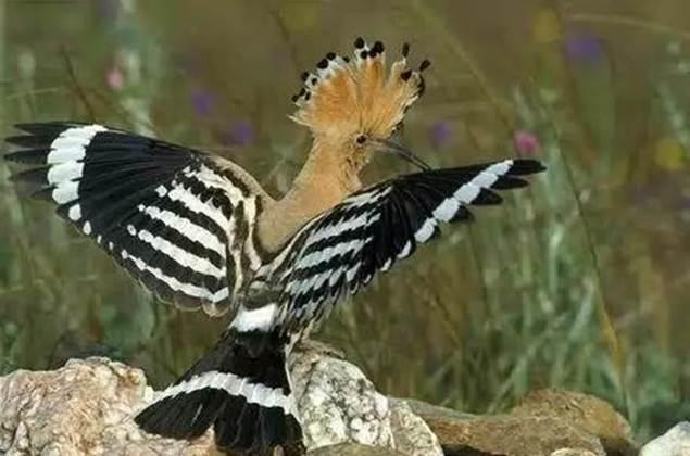 Les oiseaux du parc Bambouseraie