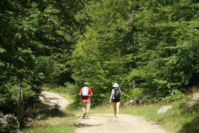 Balade en forêt au coeur du Parc National des Cévennes
