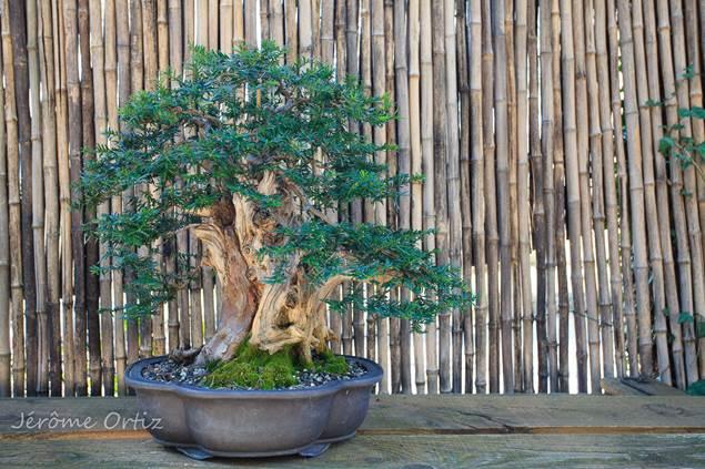 Jardin Arboretum de Bonsai