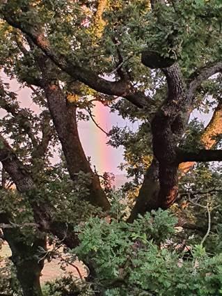 arc en ciel jouant à cache cache dans le chêne