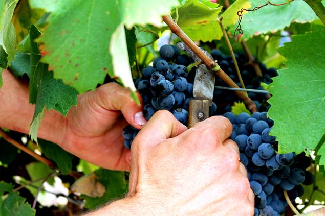 Cave St Maurice vins