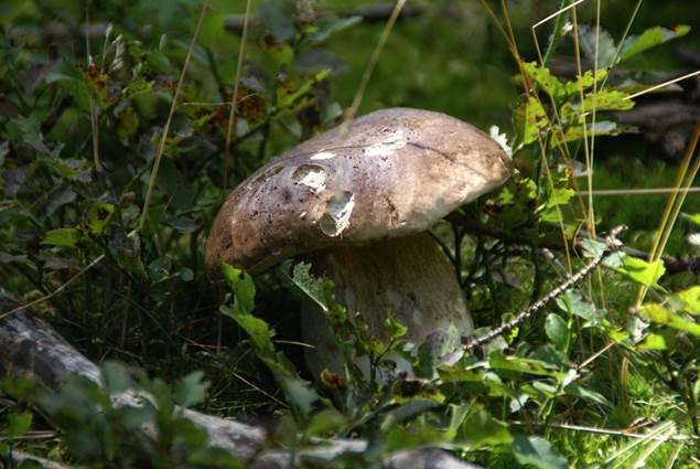 Sortie champignon en Cévennes