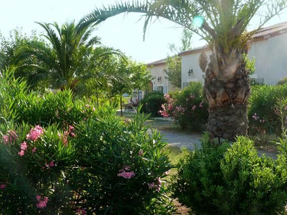 JASSES DE CAMARGUE jardin