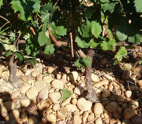 Vigne Mourgues du Grès