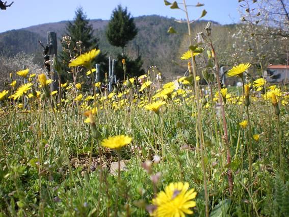 chalet-location-la-bayte-le-martinet-cevennes-jardin