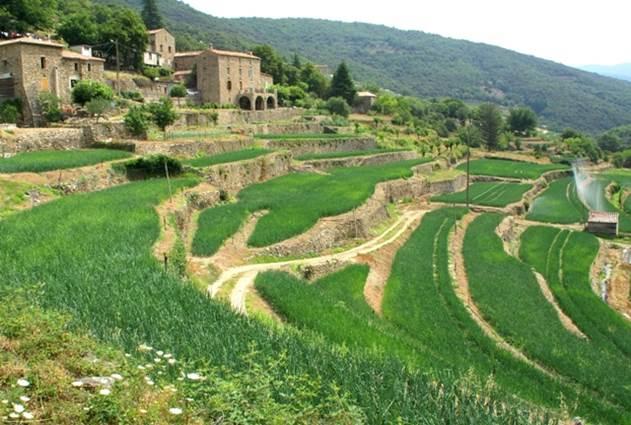 Cévennes-terrasses d'oignons