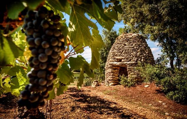 Les vignerons de St Dézery
