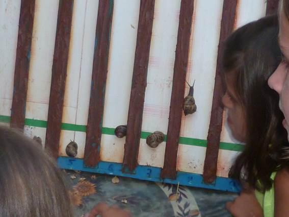 la caracole st florent sur auzonnet