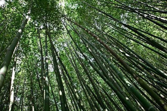 Couleur Nature à la Bambouseraie