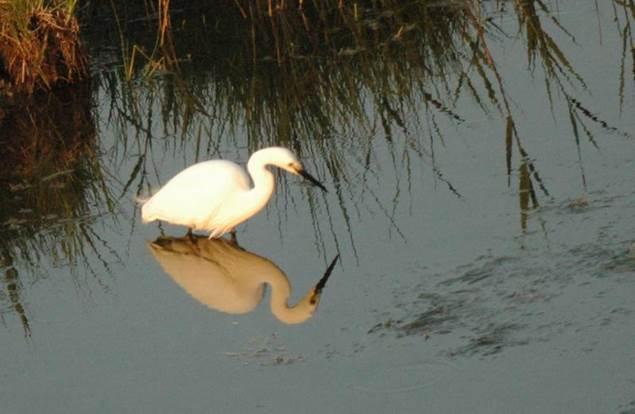 Oiseau - Camargue Aventure