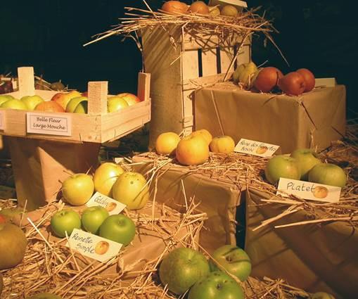 journees-arbre-plante--fruit-collection-pomme