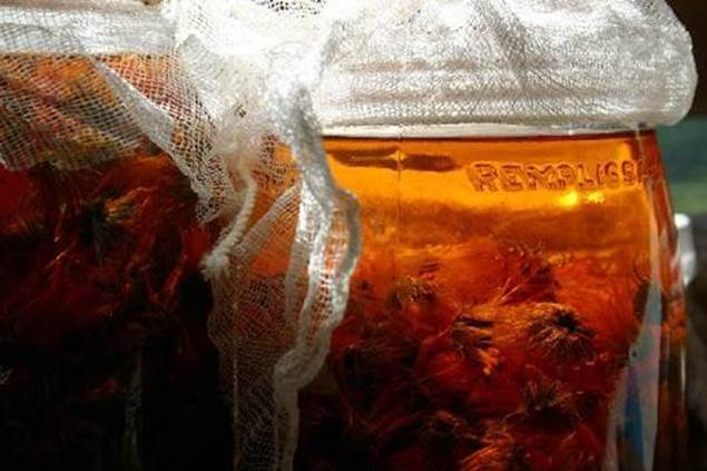 naturopathie-plante-infuse