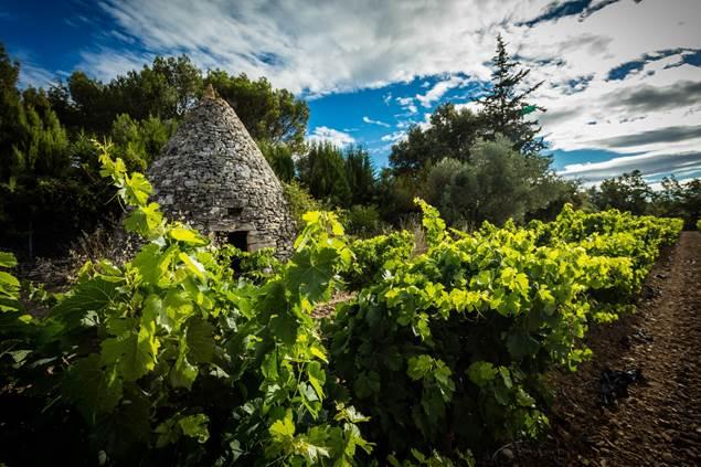 Capitelle en bordure de vigne