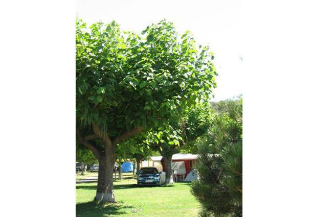 aire-naturelle-camping-