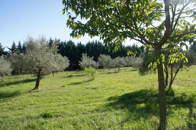 gite-l-oliveraie-st-christol-les-ales
