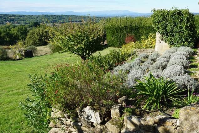 Le jardin avec son cerisier et ses lavandes