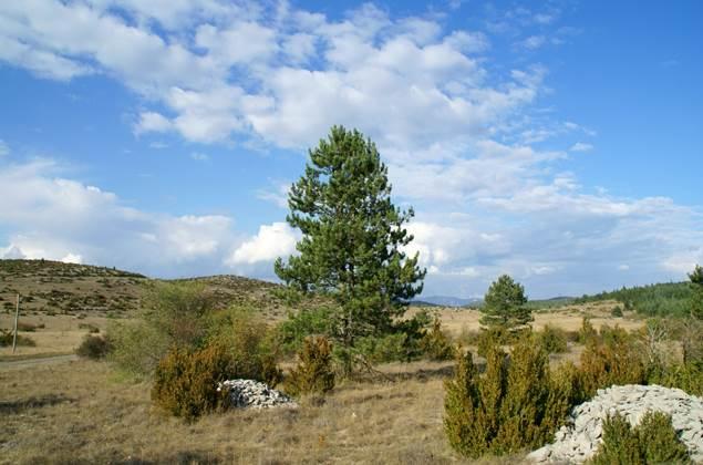 paysage du causse-8608
