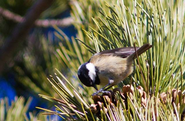 A tire d'ailes- Escapades Nature Gard