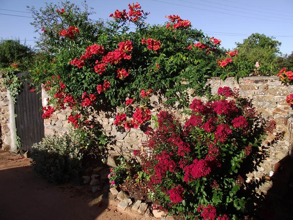 Muret en pierre agrémnté de son massif fleuri
