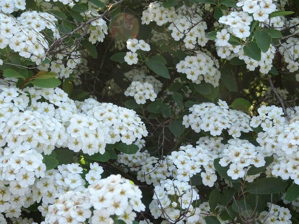 Les Jardins d'Eleusis(6)