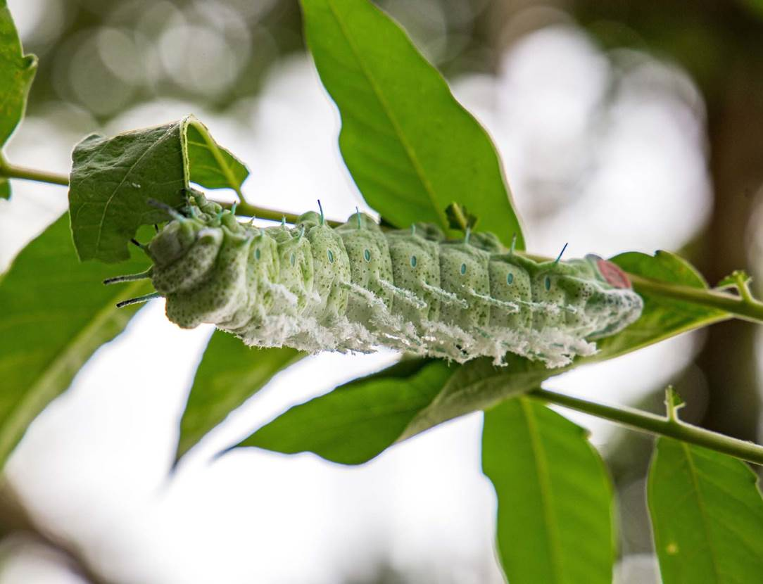 jardin-aux-papillons-morbihan-bretagne-sud-21