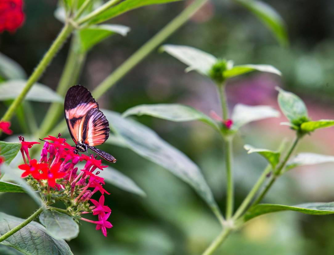 jardin-aux-papillons-morbihan-bretagne-sud-23