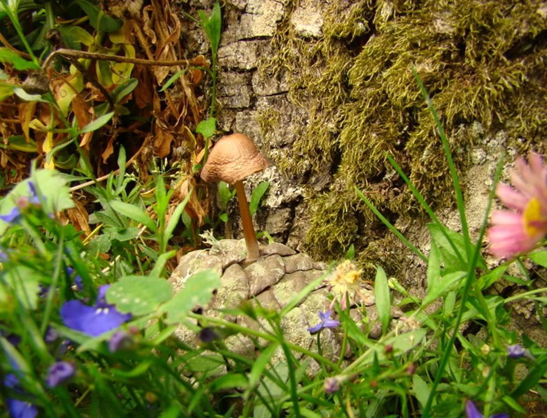 champignon sur une pomme de pin