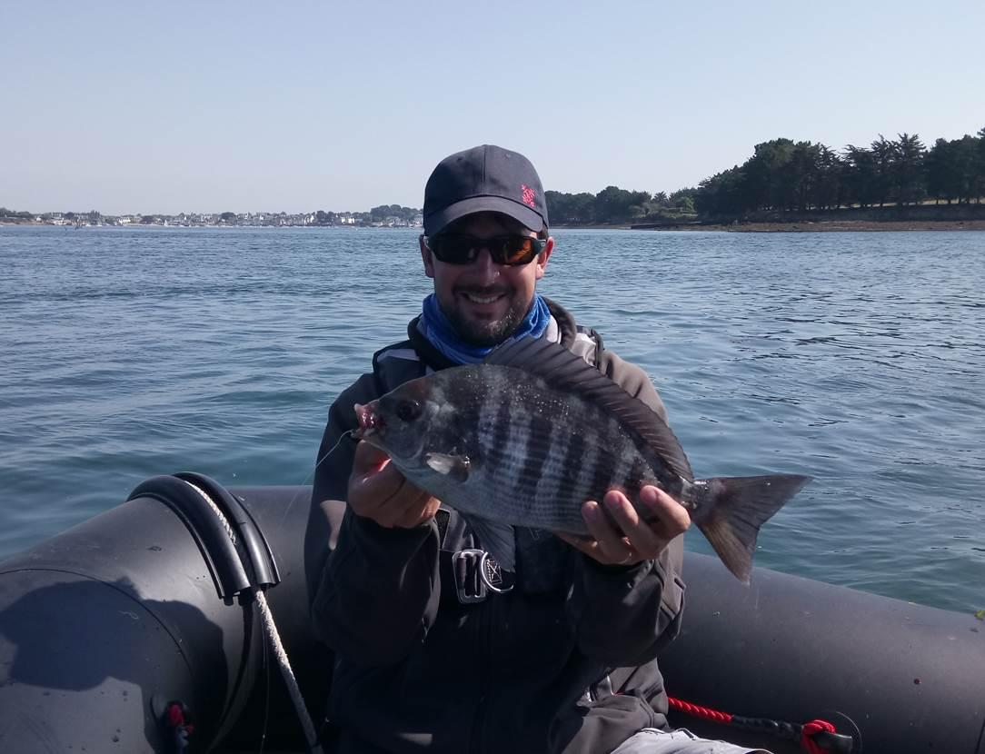 Belle pêche de dorade grise sur le Golfe du Morbihan, avec Mickaêl RIO, moniteur, guide de pêche