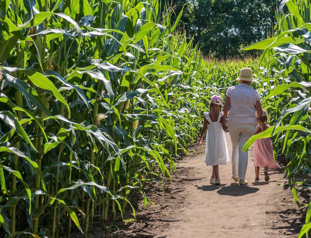 Pop Corn Labyrinthe-Ploemel-Morbihan-Bretagne-sud-04