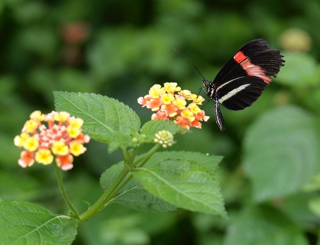 jardin-aux-papillons-morbihan-bretagne-sud-13