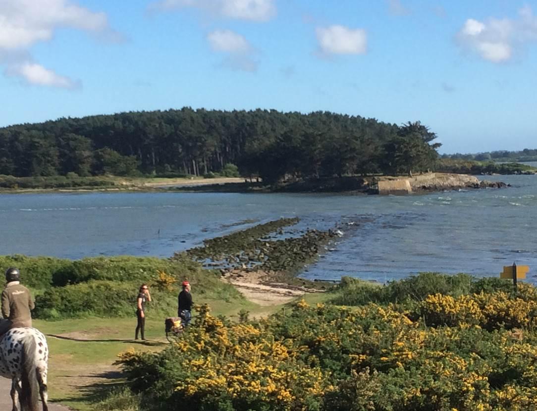 Les îles de Séné vue des sentiers - Séné - Golfe du Morbihan - Bretagne Sud