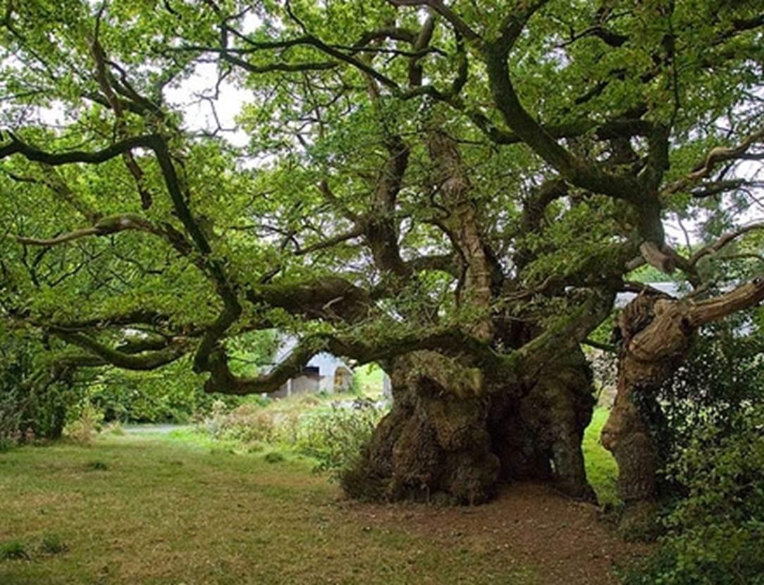 Exposition-Les-arbres-remarquables-Grand-Champ-golfe-du-morbihan-bretagne sud