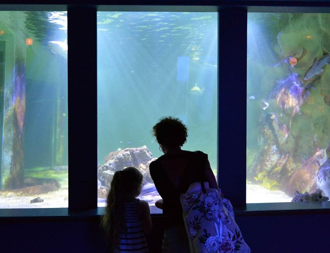 Aquarium-de-Vannes-Morbihan-Bretagne-Sud-10