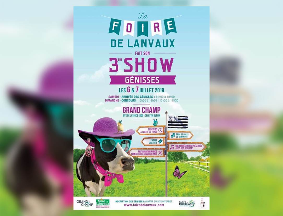 Show-Génisses-Grand-Champ-Golfe-du-Morbihan-Bretagne Sud