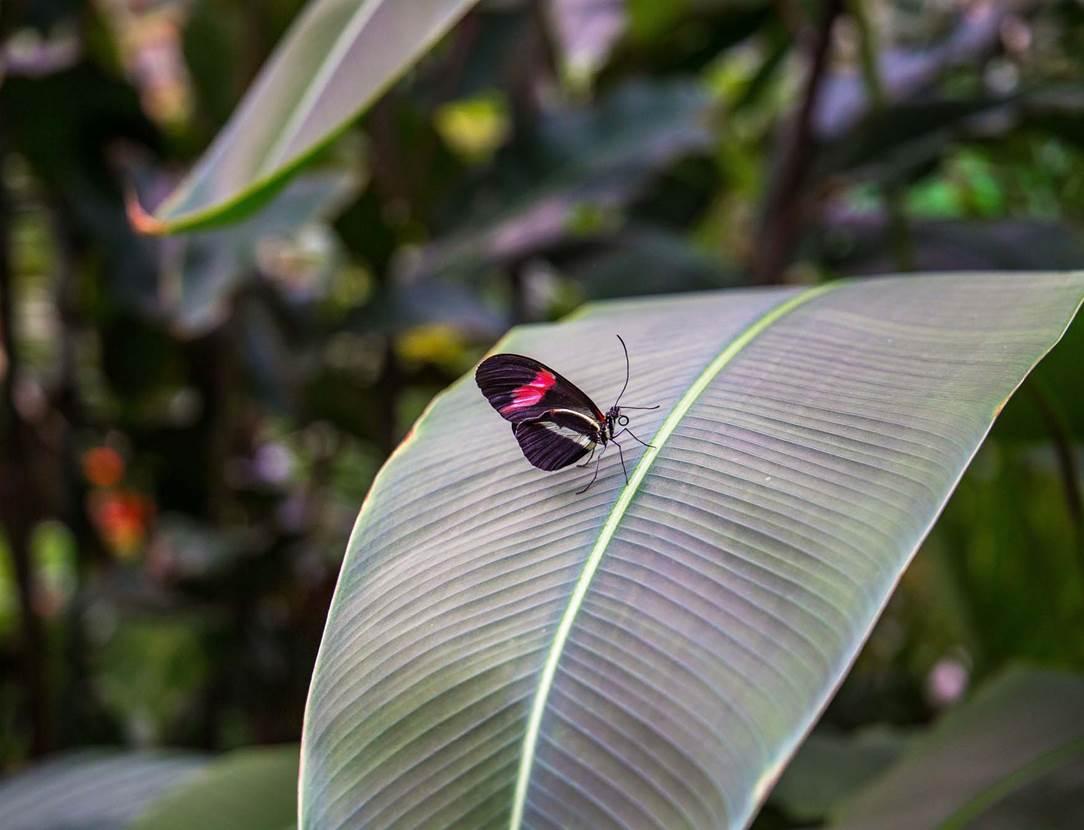 jardin-aux-papillons-morbihan-bretagne-sud-24