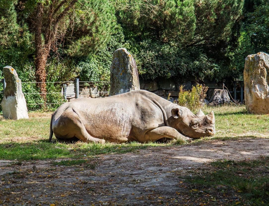 Parc-Zoologique-Pont-Scorff-Morbihan-Bretagne-Sud-09