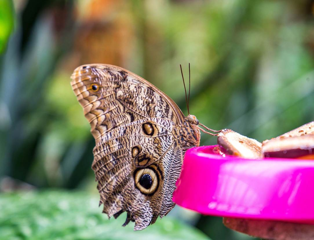 jardin-aux-papillons-morbihan-bretagne-sud-25