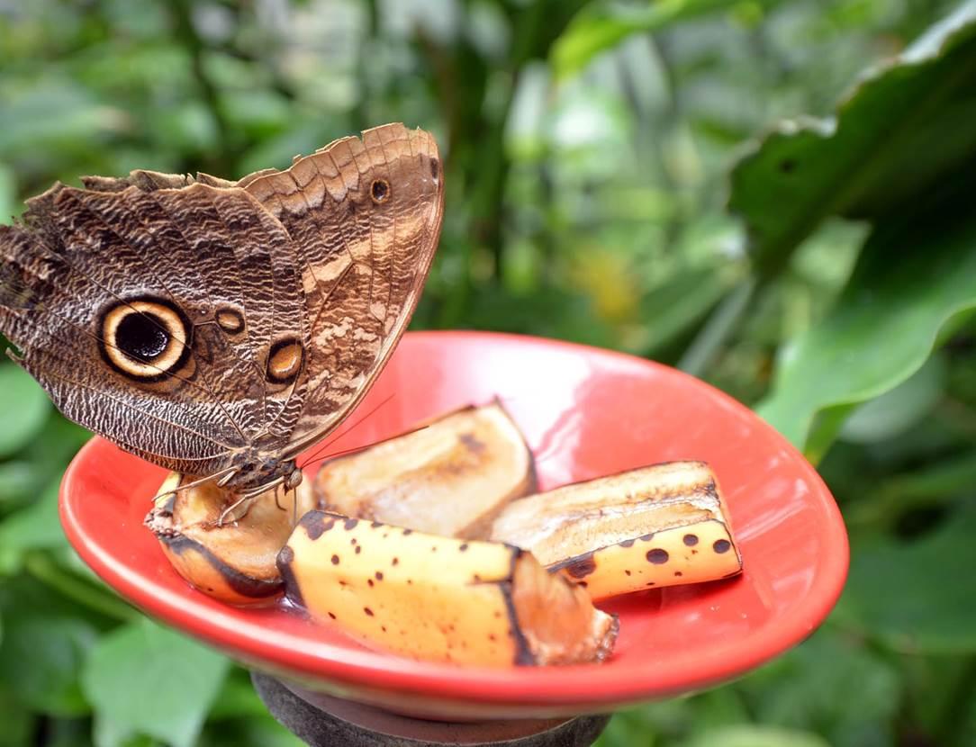 jardin-aux-papillons-morbihan-bretagne-sud-08