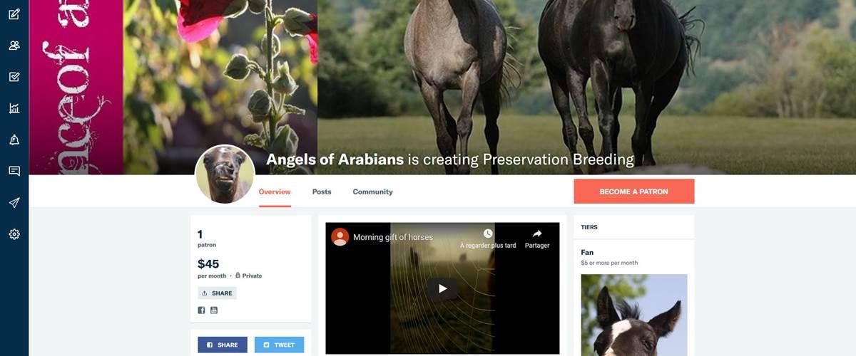 Patreon Angles of Arabians