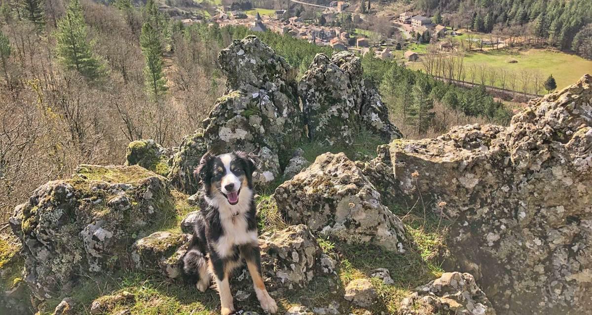 Vacances en Cévennes à Alzon  avec son chien