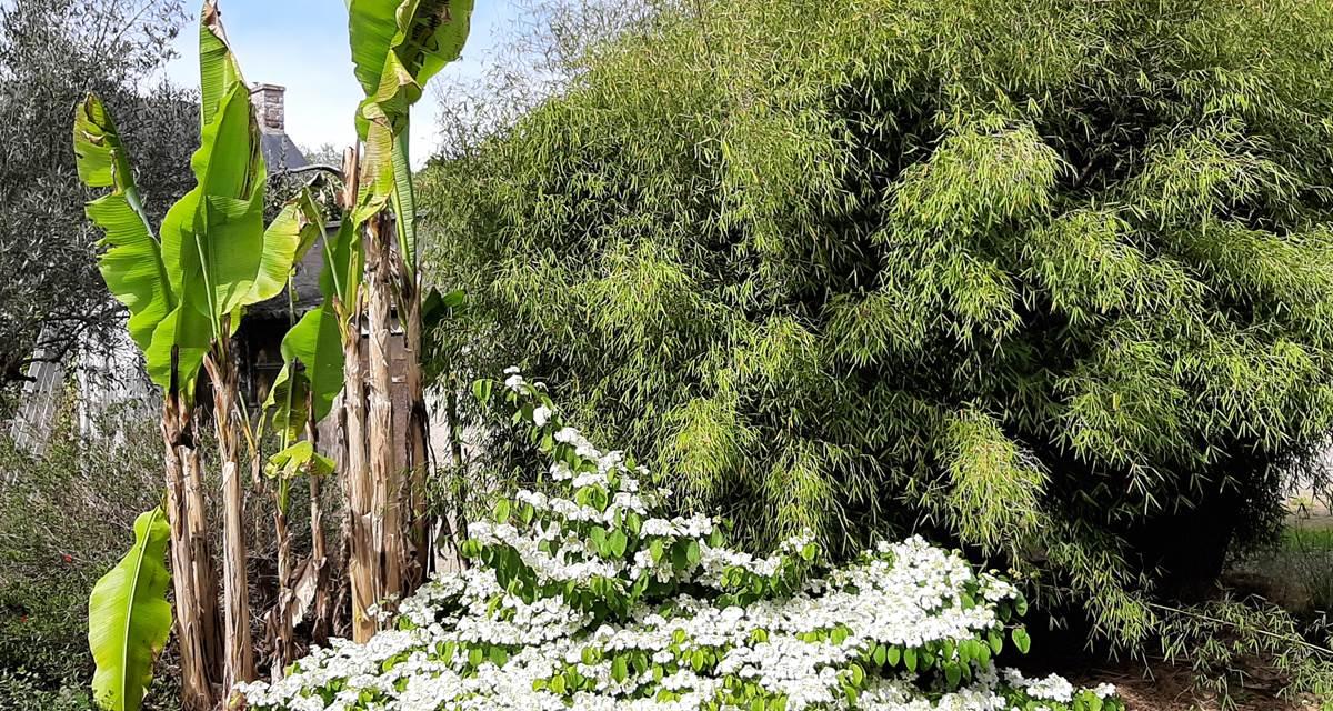 luxuriante végétation tropicale