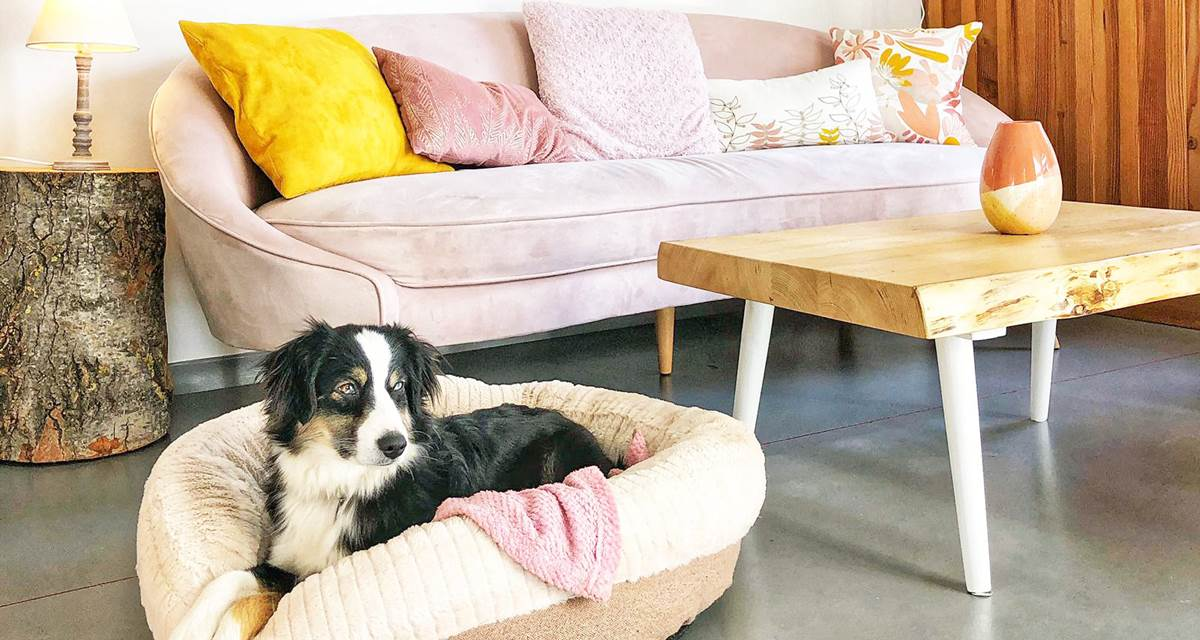 Chalet cosy en Cévennes avec son chien