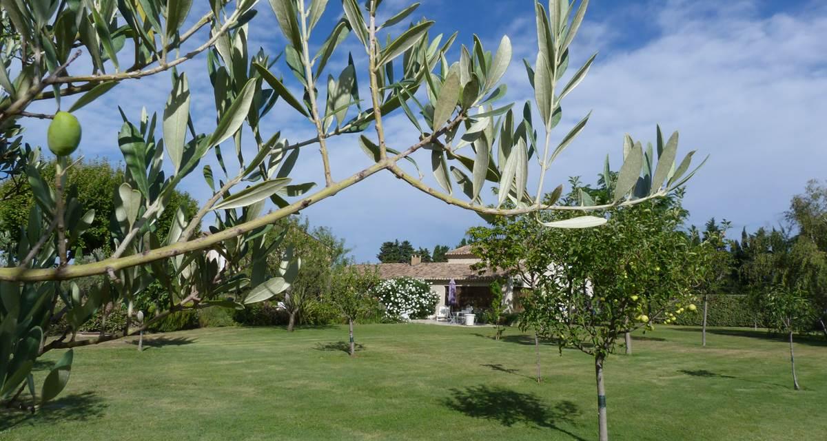 olivier et façade